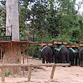 高棉~吳哥窟探險之旅