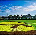 【苗栗│景點】苑裡黃色小鴨