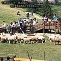 【南投】清境農場之青青草原
