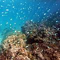 20160710 Tavewa Island
