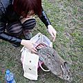 20110207兔女王出巡