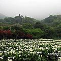 陽明山竹子湖