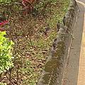 新夯點~泰山黎明花園步道