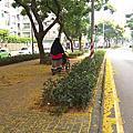 9月林口行道樹隨拍