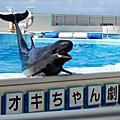 日本沖繩海洋博公園 2016/10/14