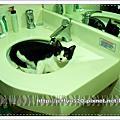 原來洗手台也有這種功能