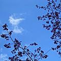 20080120-塔塔加夫妻樹