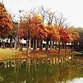 2015~2/8台南巴克禮公園