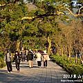 2013草山櫻花序曲
