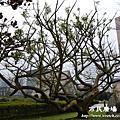 台北市市民廣場