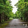 【花蓮‧玉里】松浦田間小徑、大農大富森林園區散步