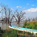 【肯亞‧Baringo】Lake Baringo 肯亞賞鳥勝地