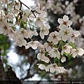 2017 4月 首爾+北海道之旅