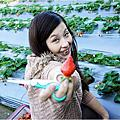 ▍2013。1月▍苗栗大湖✖採草莓