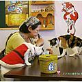 蒲公英貓餐廳