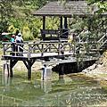 20150802 ღ 有如明信片般的美景‧台東森林公園必遊景點~黑森林-琵琶湖
