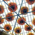 味衛佳柿子觀光農場