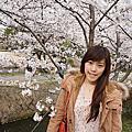 ♥京阪奈追櫻。花現京都♥
