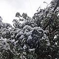 2016春雪