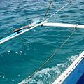 ~出海釣NIMO~