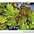 20061104 台北植物園
