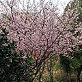 20140204 大溪觀光果園