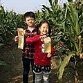 20141206 義竹玉米迷宮