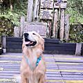 寵物展+太平山