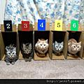 貓咪收納法