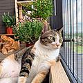 隱形鐵窗│貓防墜網施作案例