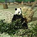 101.10.5 Taipei zoo