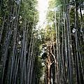 Trip-JP Kyoto. 嵐山