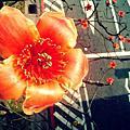 龍靖-四月-花