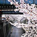 2012 Tokyo Day 5 (自由之丘、目黑川)