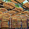 新竹的九降風... 柿子的季節