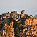 991006奇松怪石之黃山