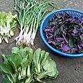 工廠青菜植物水果