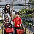日月潭&集集逍遙遊-day1-大湖採草莓
