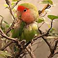A_BIRD_鸚鵡們