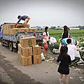 20130413雲林元長高麗菜