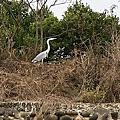 201712 台江漁樂園
