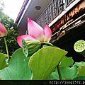 台南六甲.蓮花世界