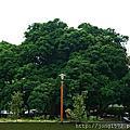 中市~西區.茄苳樹王文化生態公園