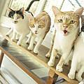 Mobby莫比自然食成貓抗毛球專業配方