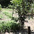 990814植樹