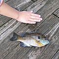 2011 Fishing