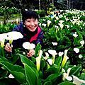 2017-竹子湖的春天(海芋花季)