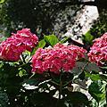 心情分享、美麗植栽