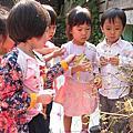 108年5月若瑩老師班蔬菜採收