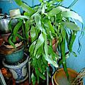 植物 仙人掌